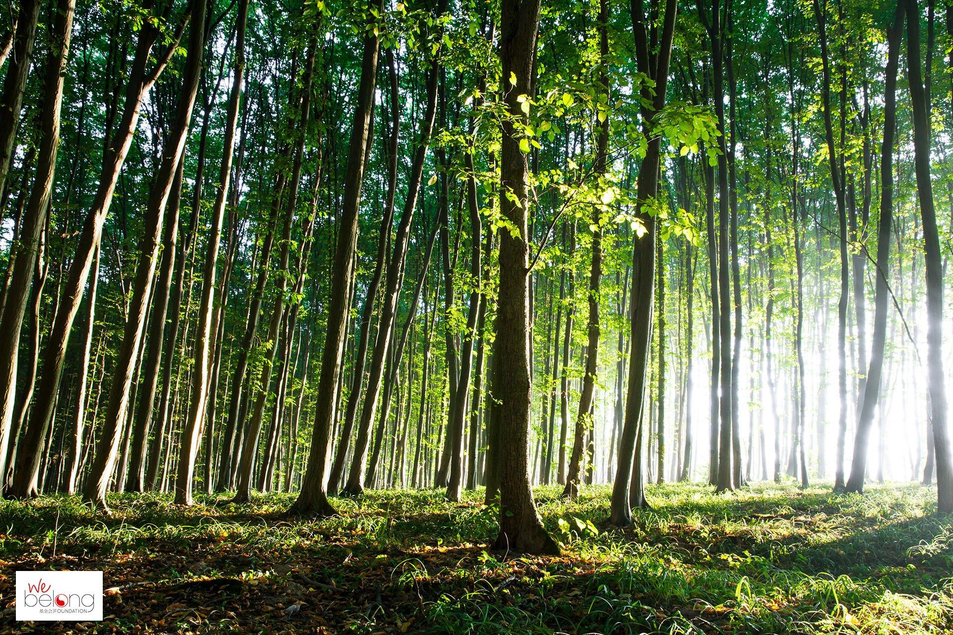 WeBop s'est vu confier la mission de refondre le site internet de WeBelong, fondation dédiée à l'environnement.